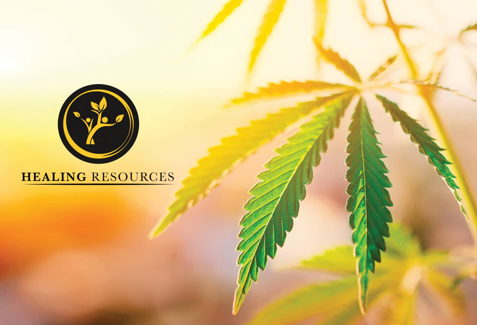 CBD Product Catalog