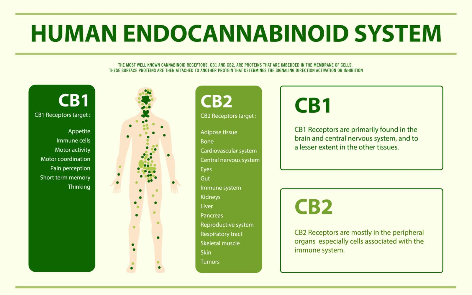 visualizes the ECS for those interested in using CBD oil in Canada