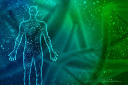 Endocannabiod System